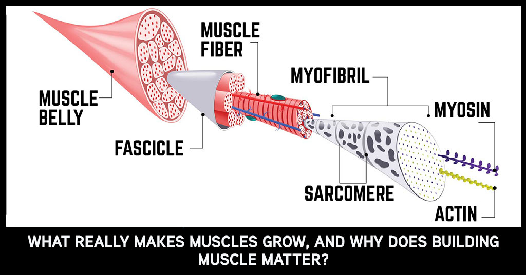 Does pump mean muscle growth